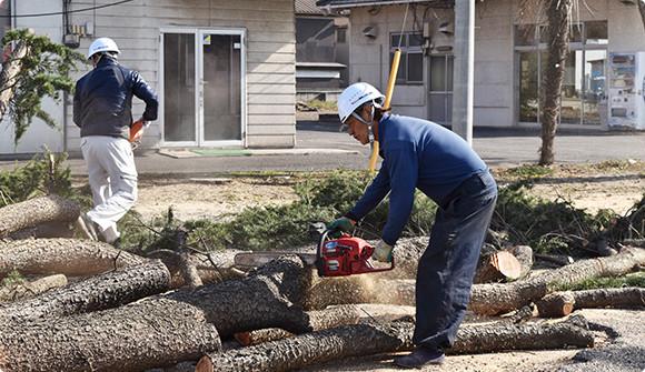 経験豊富な職人と有資格者による伐採
